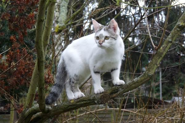 ecoGuide, Straßenkatzen, Tierfreunde, Tierschutzvereine