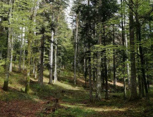 """Heidelberg: """"Gesund werden im und durch den Wald"""""""