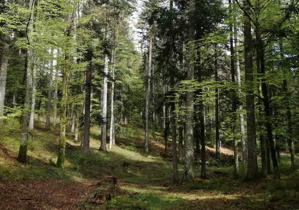ecoGuide, Heidelberg, Kurwald, Heilwald