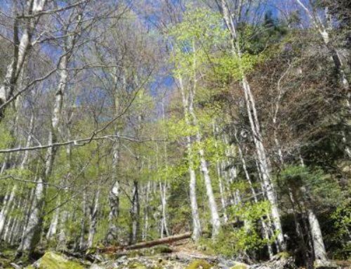 Neckargemünd: Waldbegehung im Bannwald Hollmuth